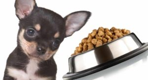 Feeding a Chihuahua Puppy the Right Diet