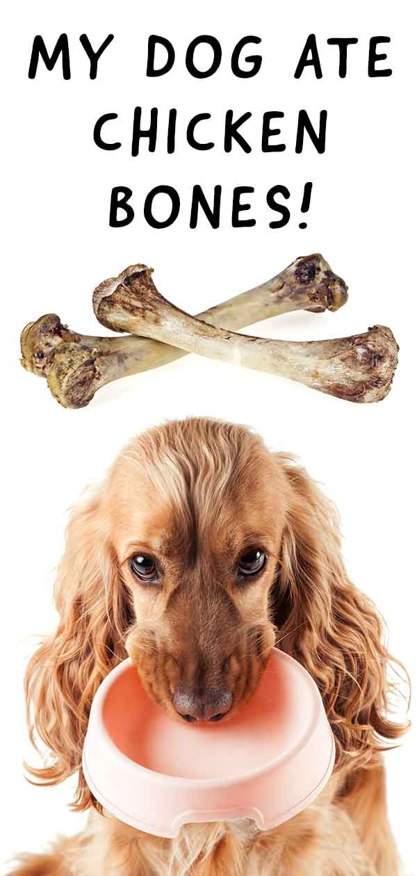 My Dog Ate Chicken Bones - A Vet's