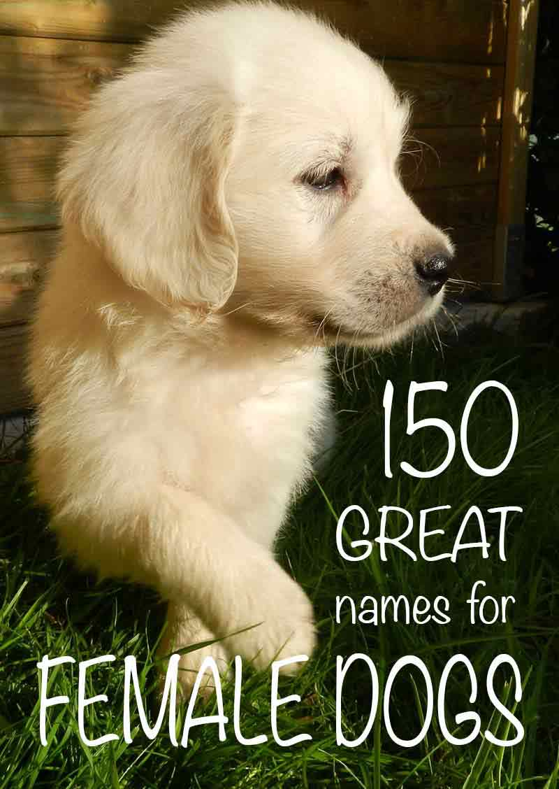 female dog names