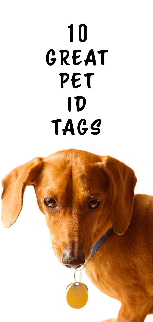 pet id tags