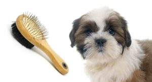 Best Brush For Shih Tzu Dogs And Their Long, Sleek Coats