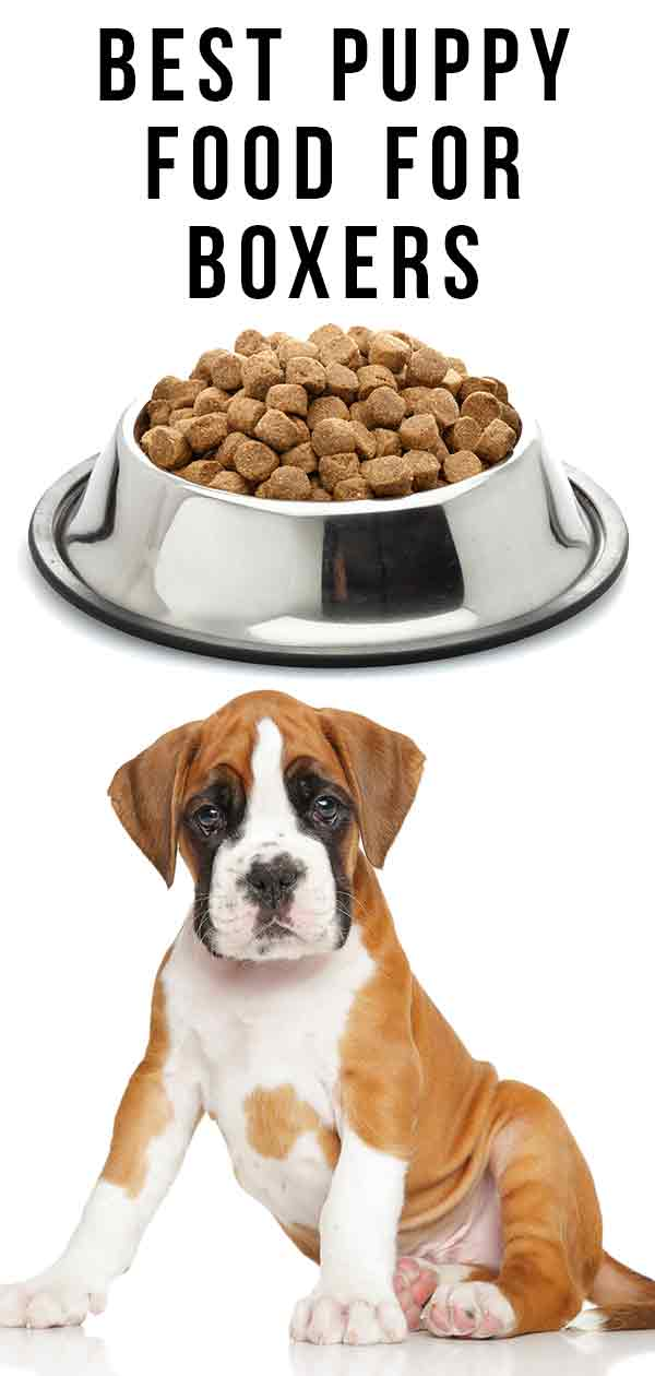 best puppy food for boxers