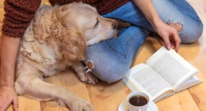Calm Dog Breeds – The Most Relaxed Canine Companions