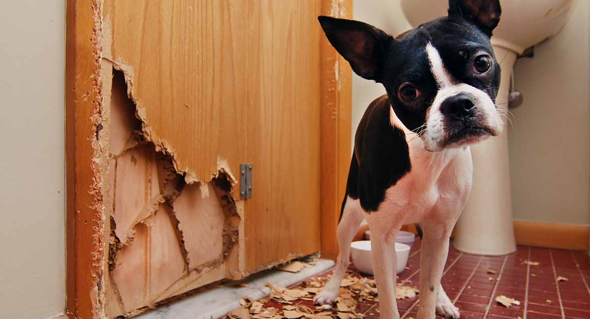 How to stop a dog from chewing your stuff!