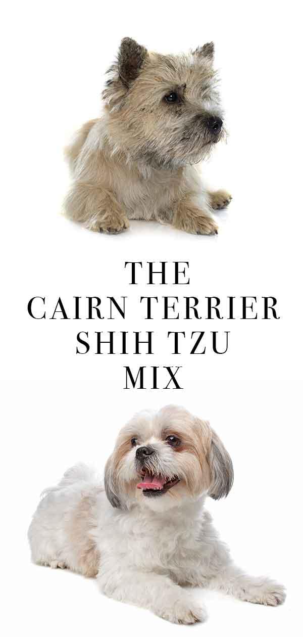 Care Tzu mix