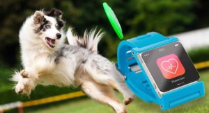 best dog activity monitors