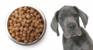 Best Food For A Great Dane Puppy – Help Him Grow Up Big And Strong