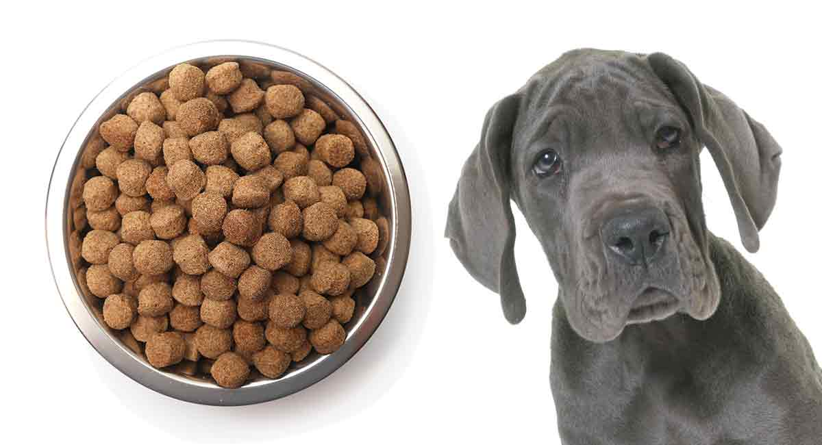 Best food for Great Dane puppy dogs