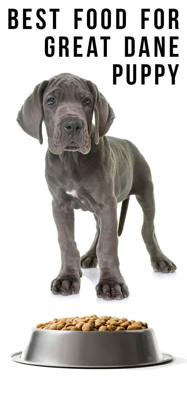 best food for a great dane puppy