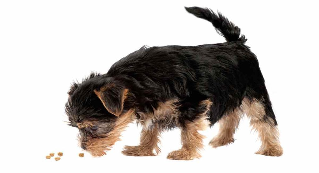 best food for yorkie puppy