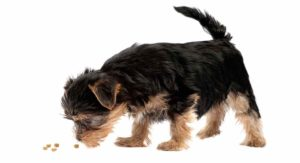 Best food for Yorkie Puppy Dogs