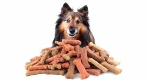 Best Organic Dog Treats – Which Brand Is Best for Your Pup?