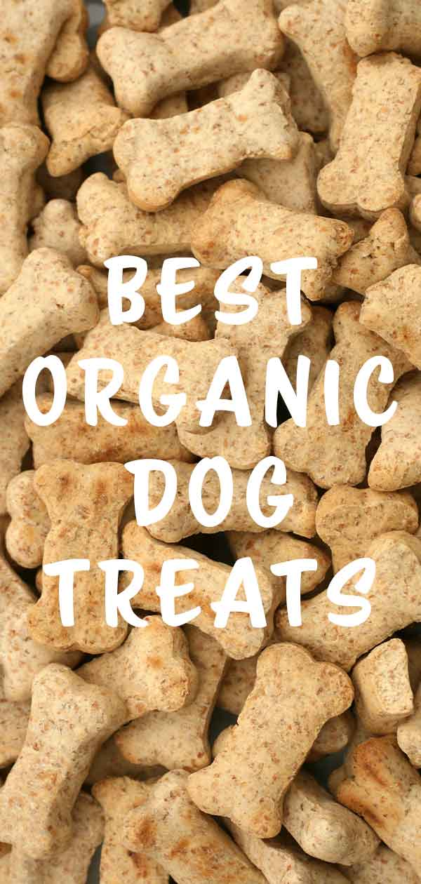 best organic dog treats