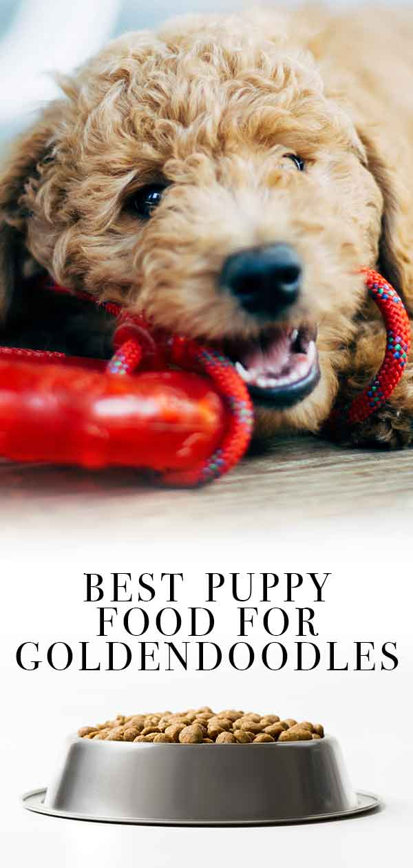 best puppy food for goldendoodles