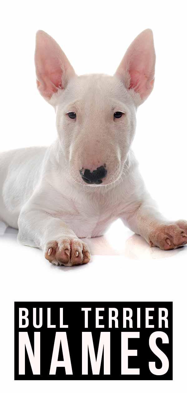 Good Bull Terrier names