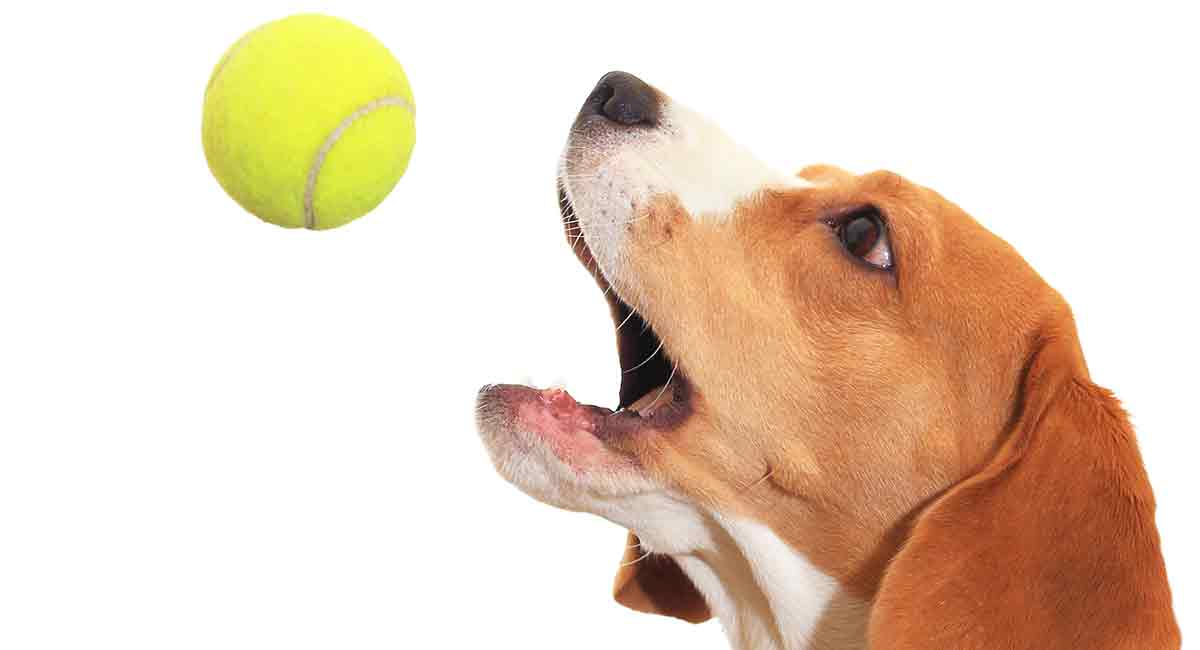 best dog toys for beagles
