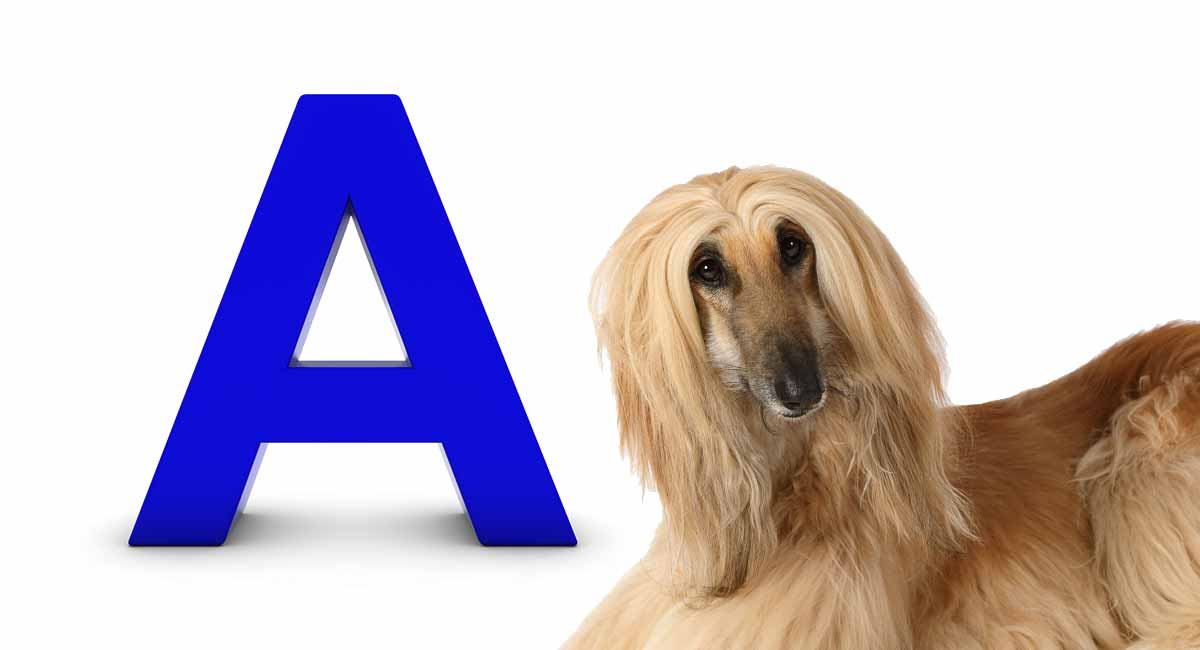 dog breeds that start with a