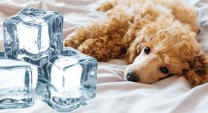 Best Cooling Pads for Dogs – Keep Your Pooch from Overheating!
