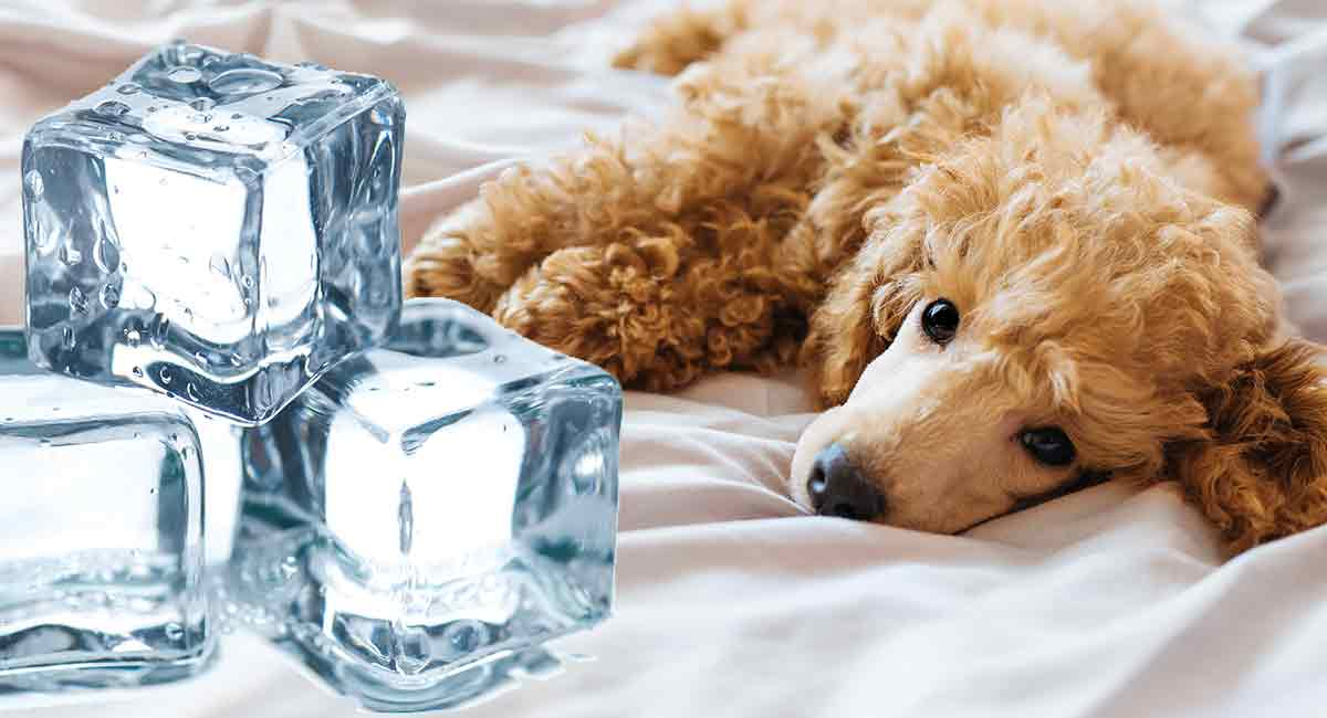 dog cooling pads
