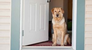 Best Electronic Dog Door – Finding The Right Model For Your Pup