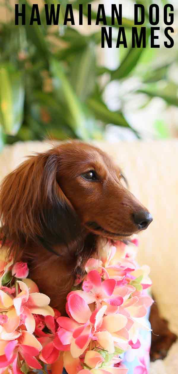 Hawaiian Dog Names: Find the Perfect One for Your Pup
