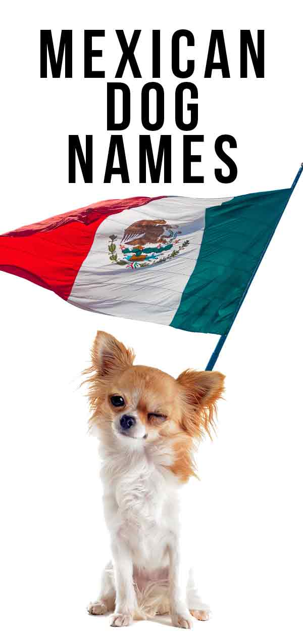Naming Your Mexican Dog Puppy Or Rescue Dog