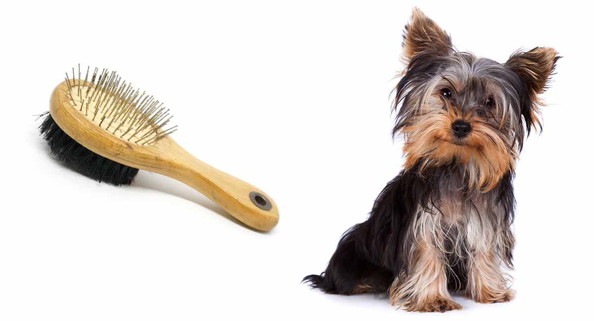 best brush for yorkie