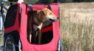 Best Dog Bike Trailers – Take Your Pooch For A Ride