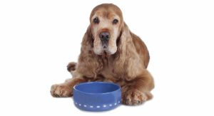 Best Dog Food for Senior Dogs with Sensitive Stomachs