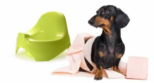 Best Indoor Dog Potty – Only The Best For Your Pampered Pooch