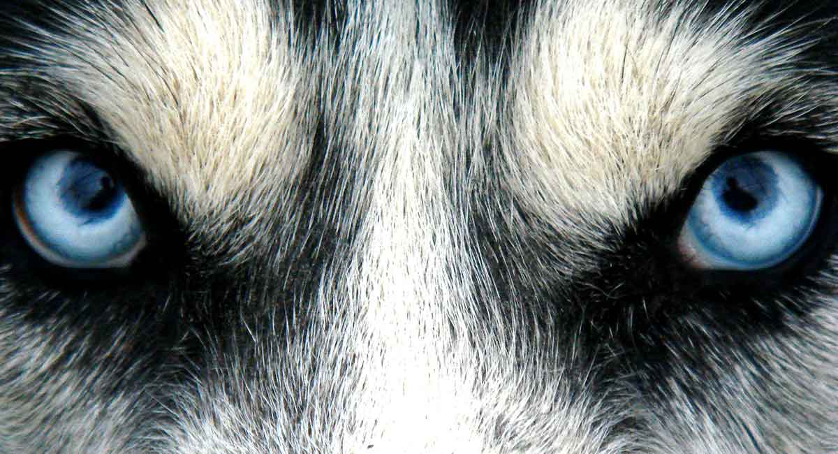 Blue eyed dog names
