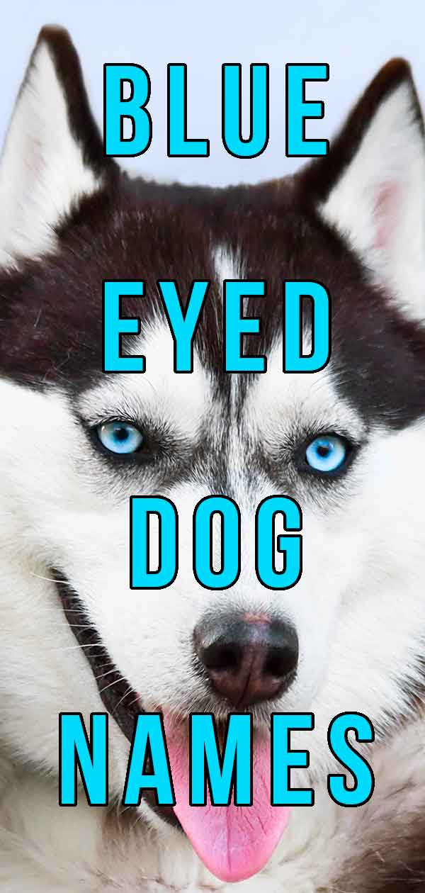 Blue Eyed Dog Names - The Best Name For Your Beautiful Pup