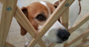 Best Dog Gates for Your Pet and Your Home