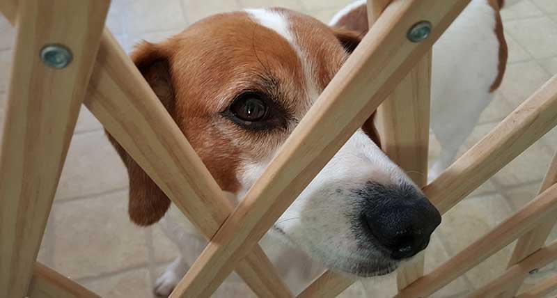 dog gates
