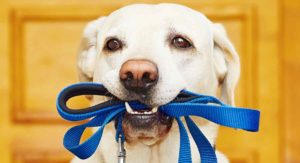 How To Choose The Best Dog Leash – Find The Right Balance Of Form And Function