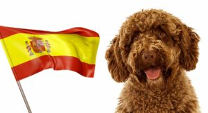 Spanish Dog Breeds: How Many Can You Name?