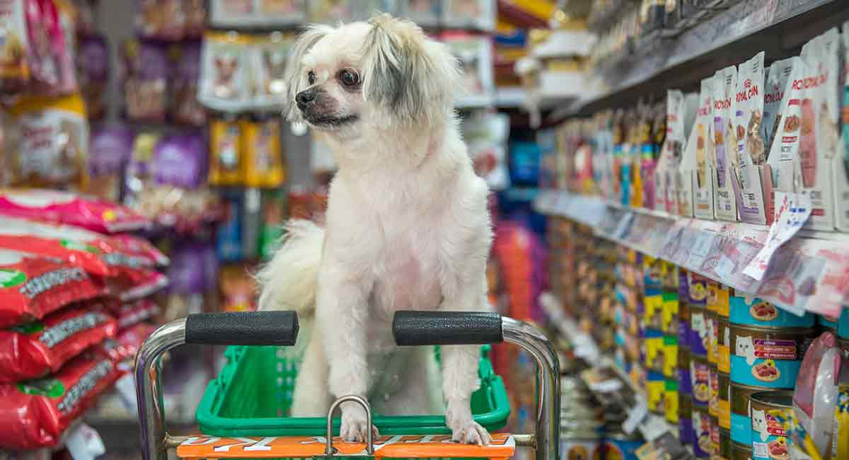 best dog products for 2019