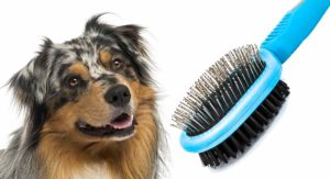 Best Brush for Australian Shepherd Dogs – We Help You Choose