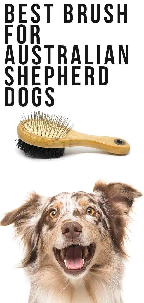 best brush for australian shepherd dogs