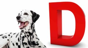 Dog Breeds That Start With D – Could You Name All Of These Breeds?
