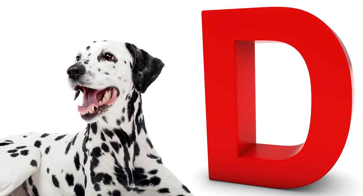 dog breeds that start with D