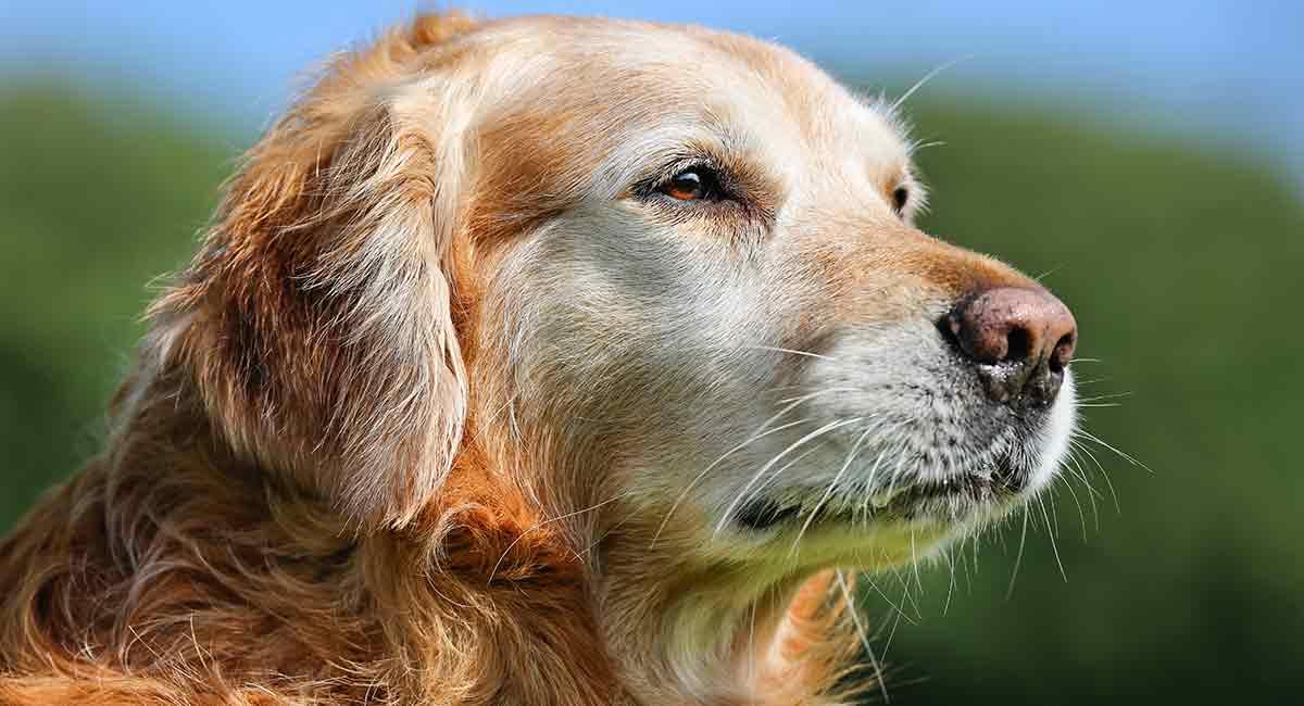 senior dog foods