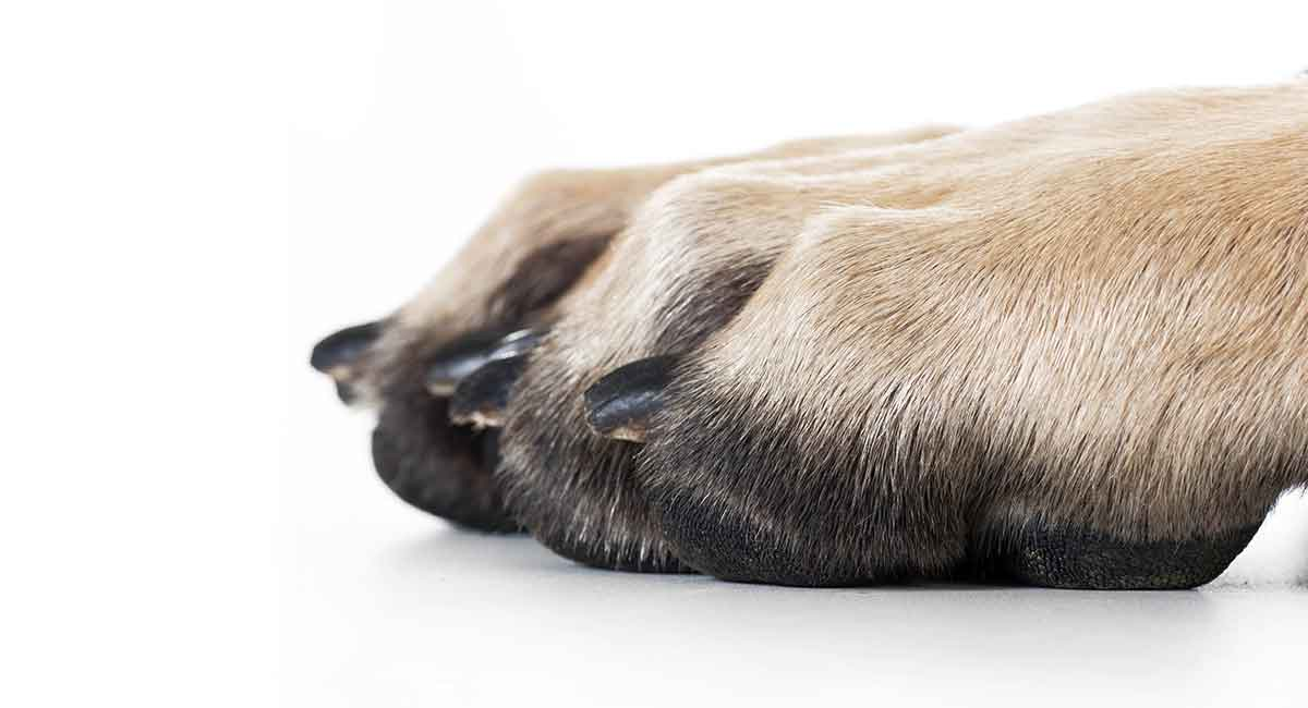 Best Dog Nail Grinder The Best Claw Care For Your Dog
