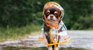 Best Raincoats For Dogs – Keep Your Furry Friend Dry In Style