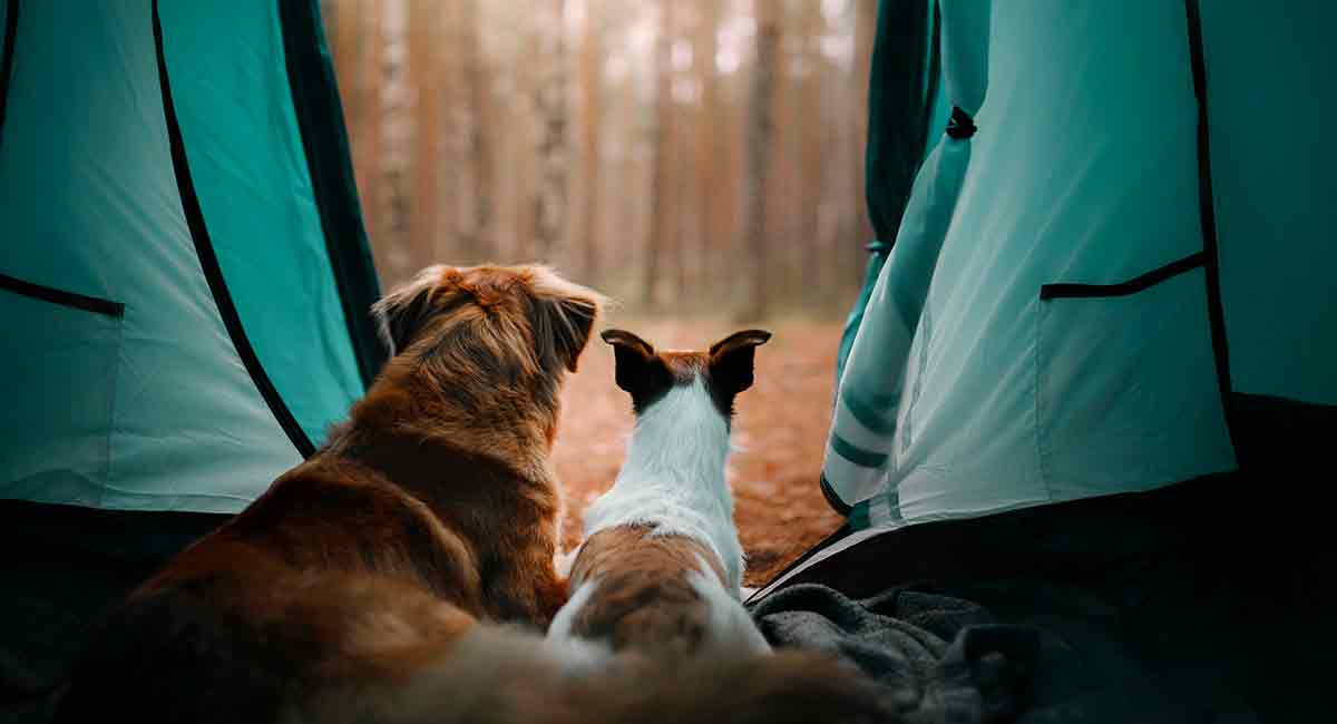 Choosing the Best Dog Tent - Which One is Perfect For You?