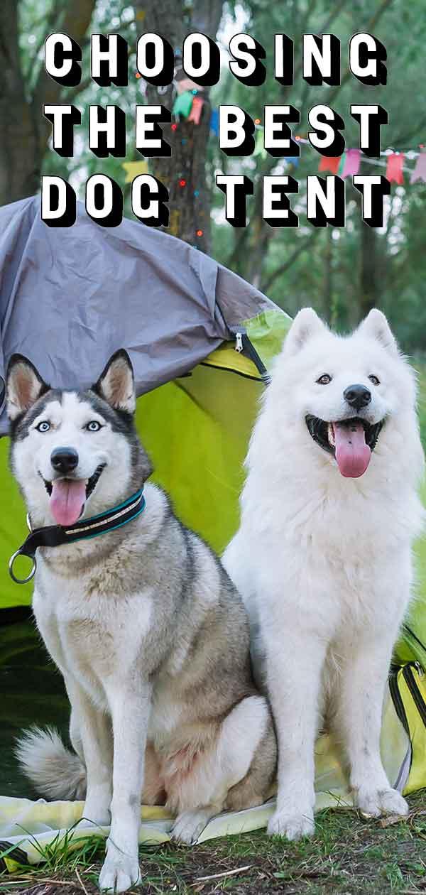 best dog tent