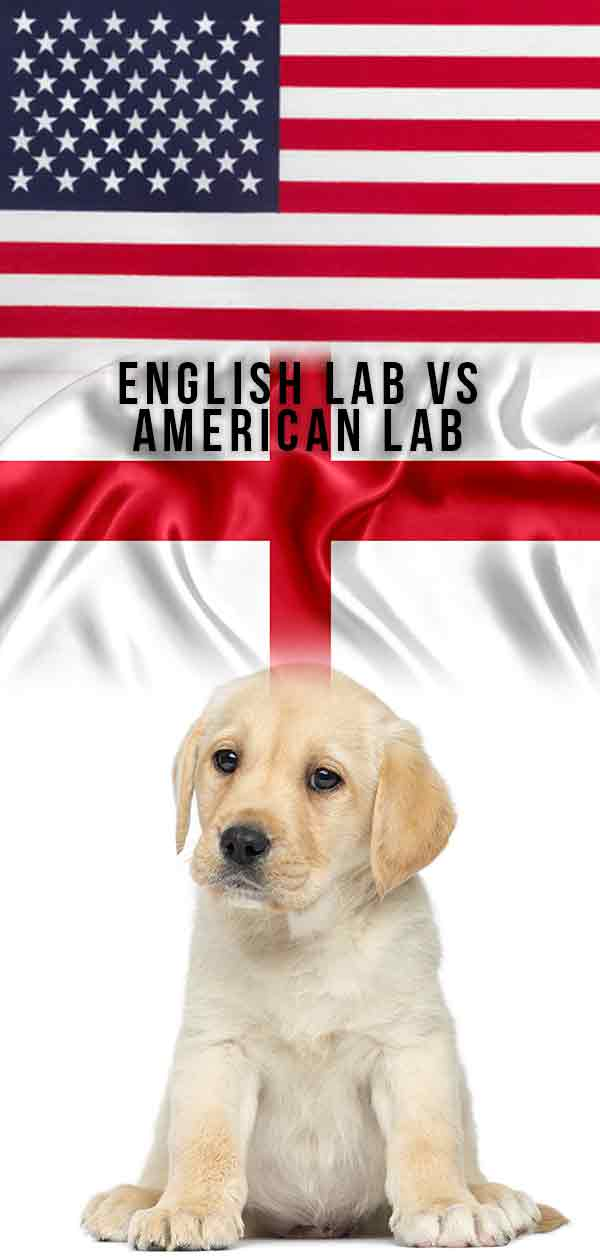 english vs american lab