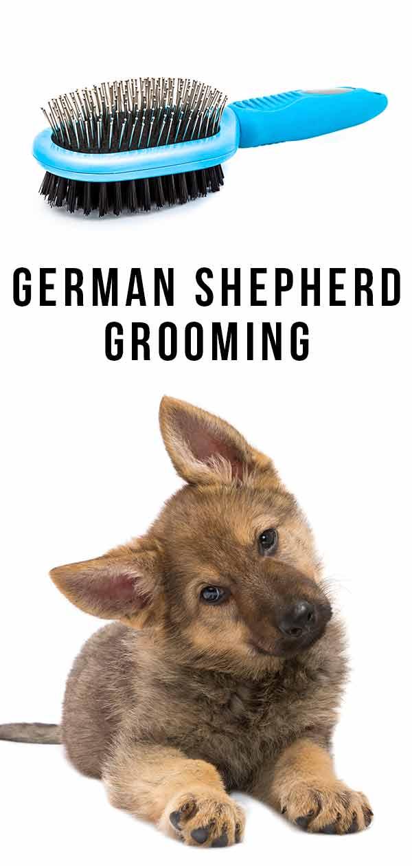 German Shepherd Grooming
