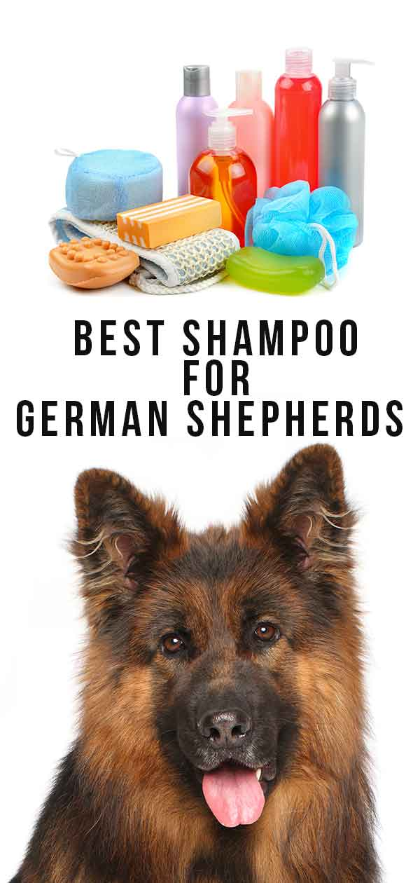 best shampoo for german shepherds