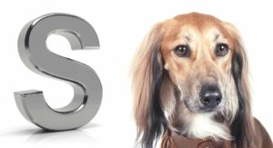 Dog Breeds That Start With S